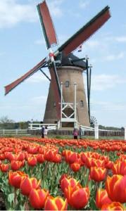 Auslandsinkasso in den Niederlanden: Effektive Werkzeuge trotz hohen Datenschutzes